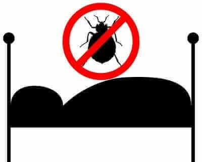 the-bedbug-comeback